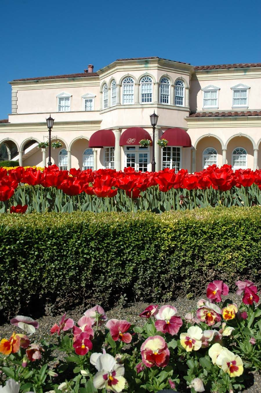 Spring tulips and flowers at Ferrari,Carano Vineyards and
