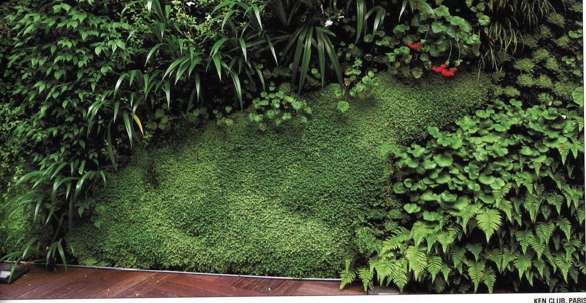 Plantas tropicales para jardin buscar con google - Plantas tropicales para jardin ...