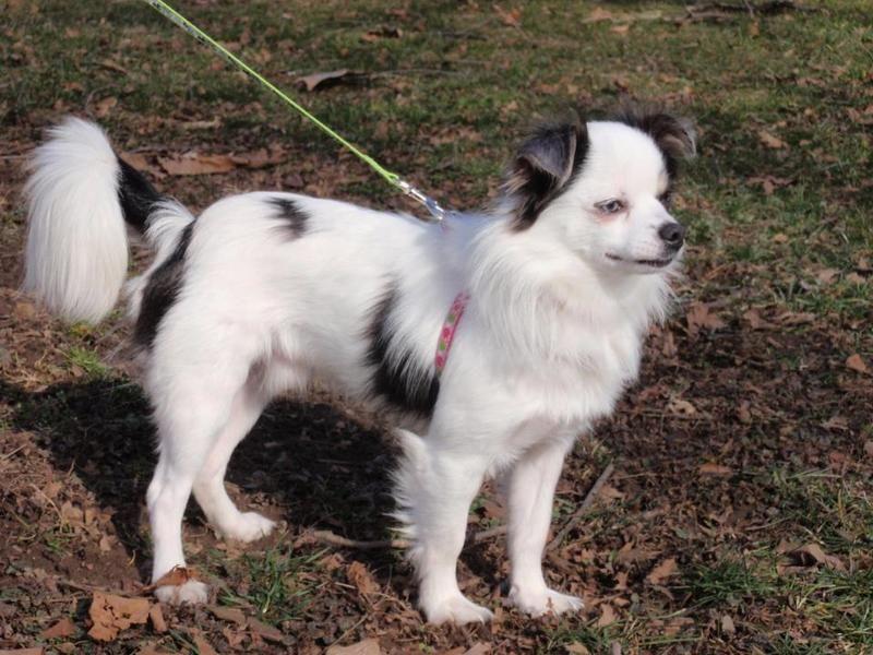 Puppies for adoption in columbus ohio