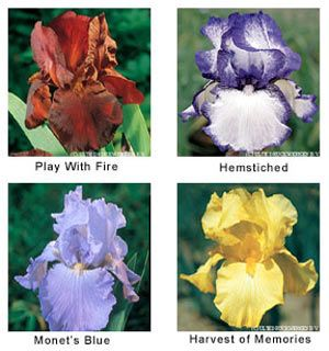 All About Irises Iris Flowers Growing Irises Flower Painting