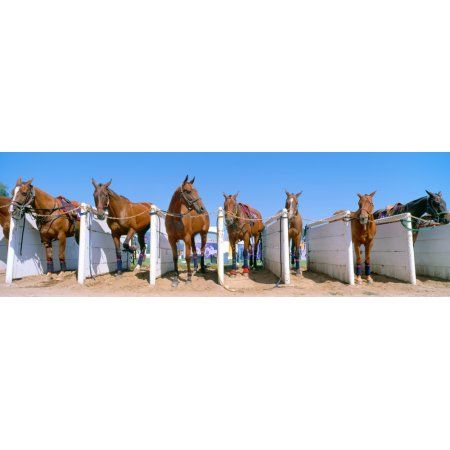 1998 World Polo Championship Horses in stalls Santa Barbara Polo and Racquet Club California Canvas Art - Panoramic Images (36 x 12)