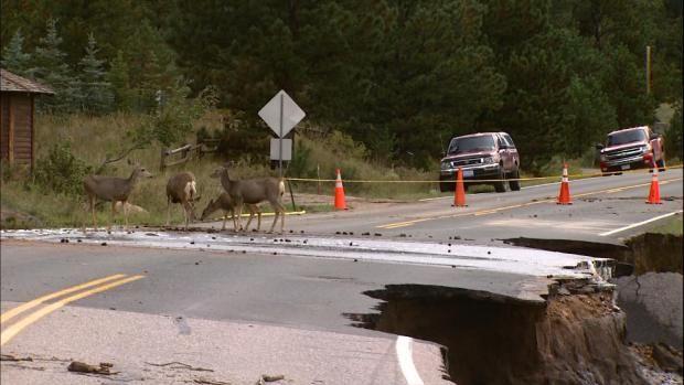 Deer in Estes Park Flood road out