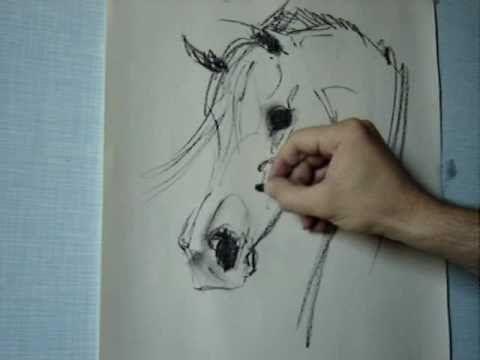 How to draw Arabian horse head- Gabriel Tora