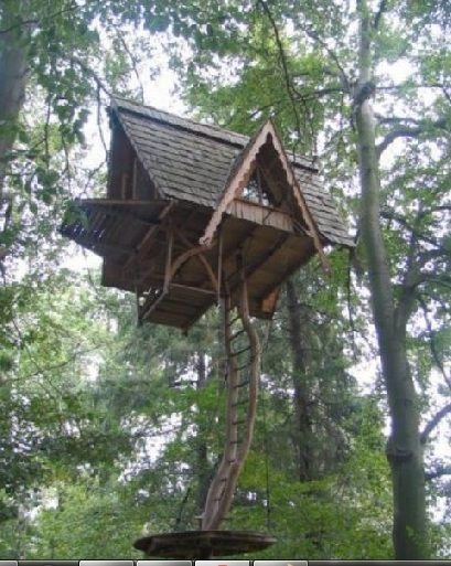 High up in the Canopy. Tree House Located outside of Belzig East Germany & High up in the Canopy. Tree House: Located outside of Belzig East ...