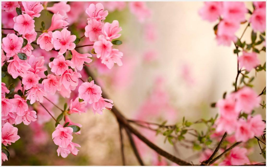 Wallpaper pictures of spring flowers siewalls spring flowers wallpaper mightylinksfo