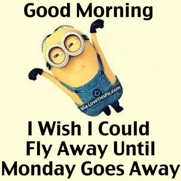 Monday Quotes Funny Interesting 50 Funny Monday Quotes  Happy Monday Quotes Funny Happy And Funny .