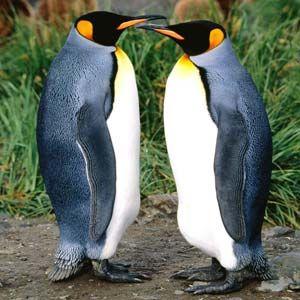 Fotos de pinguins