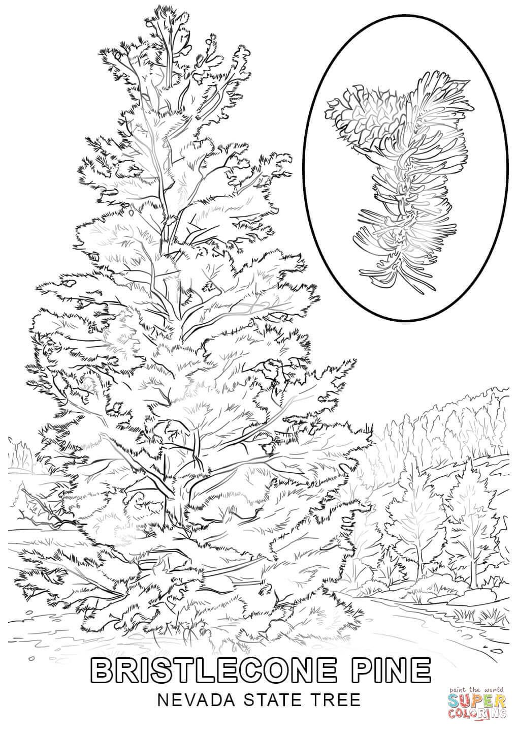 Coloring Nevada Pages State Symbols 2020 Tree Coloring Page