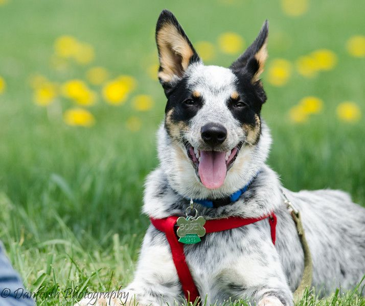 Victoria Stilwell Discusses Balanced Dogtraining Which She