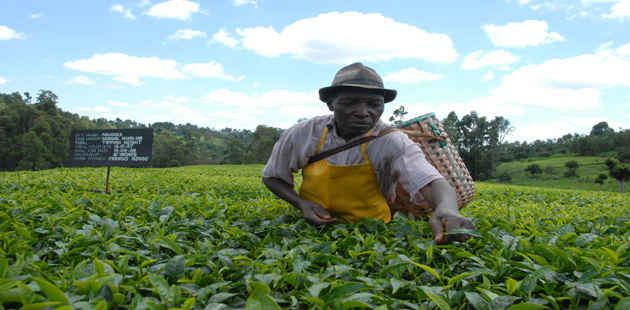 The Mkulima Swahili For Farmer Calculator Uses Step By Step Questions To Help Users Build Greenhouses Find Supplies Predict Cro Kenya Africa Travel Tours