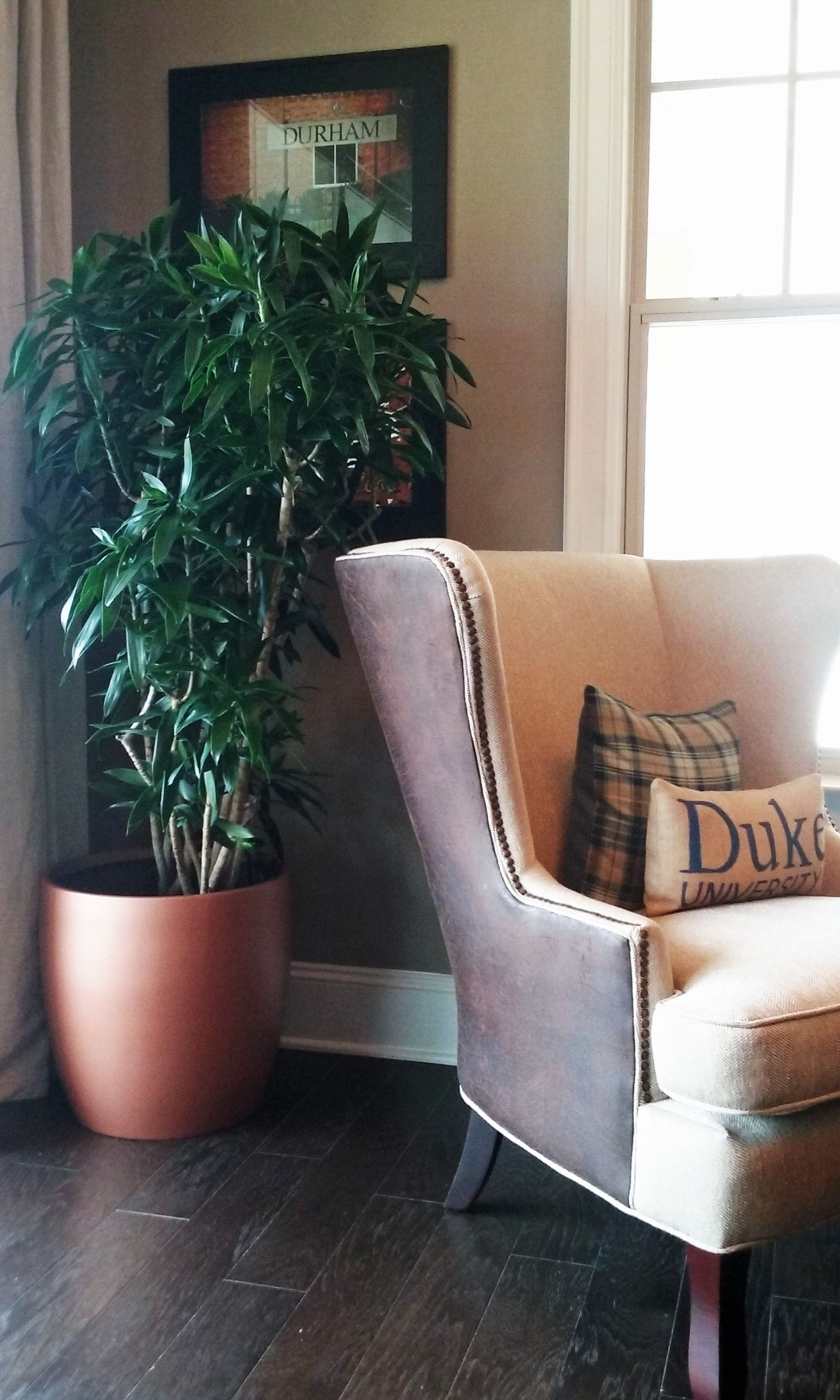 Pin On Indoor Office Plants Flowers And Care