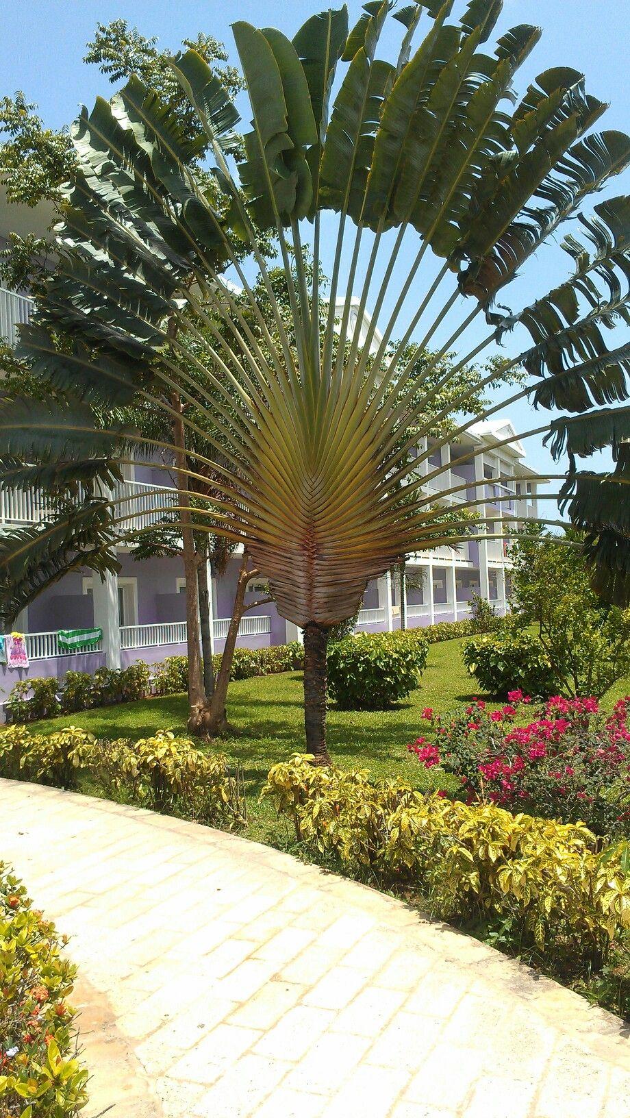 Club hotel Riu Negril Jamaica Best vacation ever!