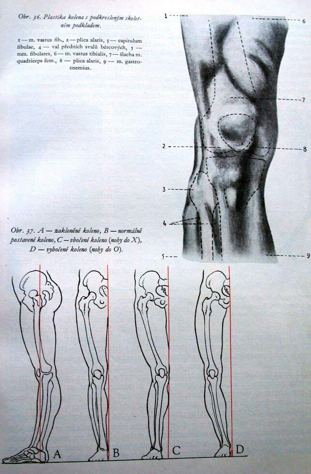 Knee anatomy | Anatomy | Pinterest | Anatomy, Leg anatomy and ...