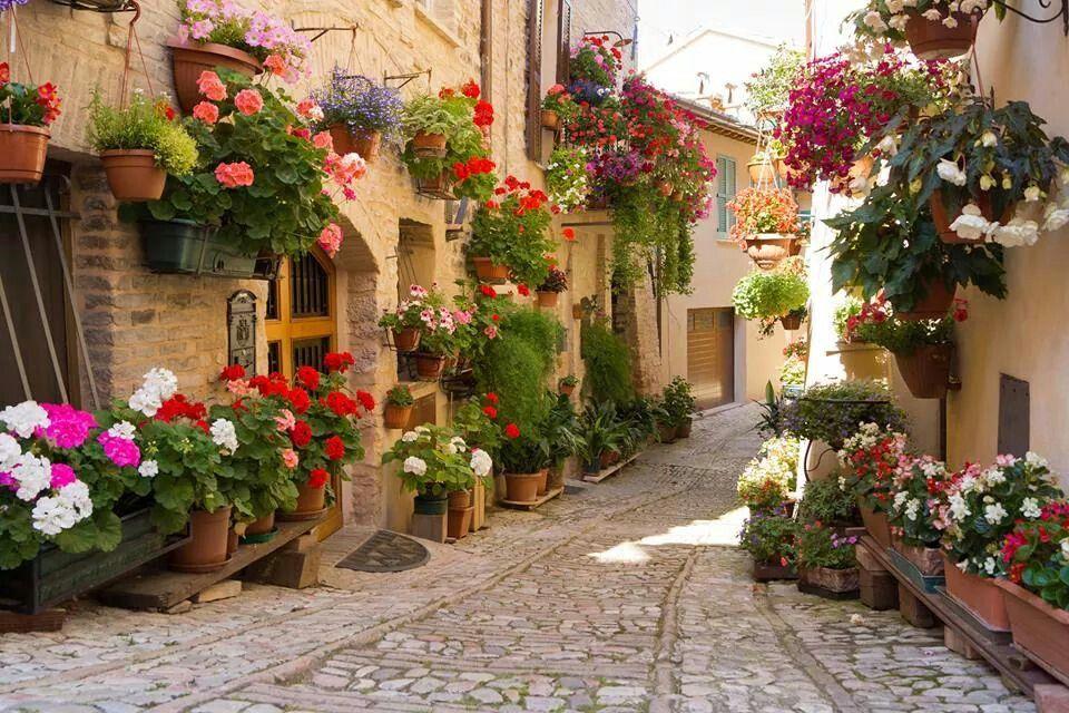 #Italy #travel #flowers #<3