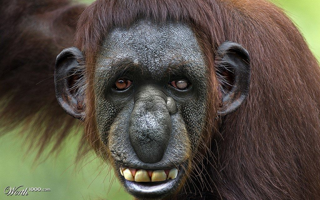 Describe the picture above you Monkeys funny