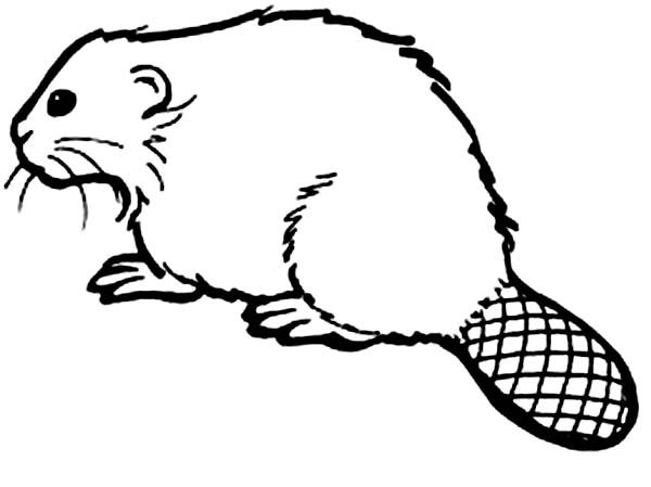 Beaver How To Draw A Beaver Coloring Page Coloring Pages