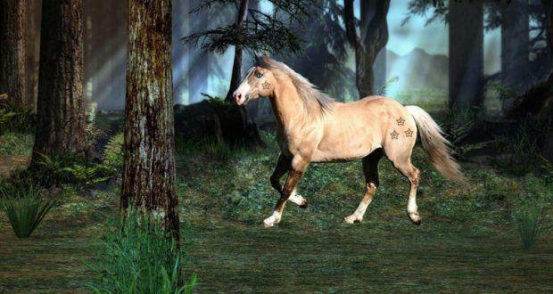 رمزيات خيول جديدة صور رمزيات خيل بجودة Hd ميكساتك Photo Horses Animals