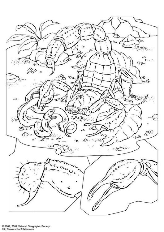 Coloring Page Scorpion