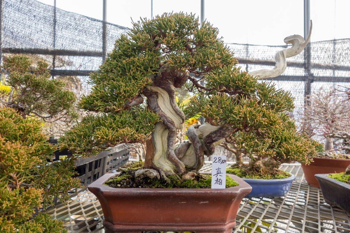 Bonsai 1789 bonsai tree bonsai garden bonsai