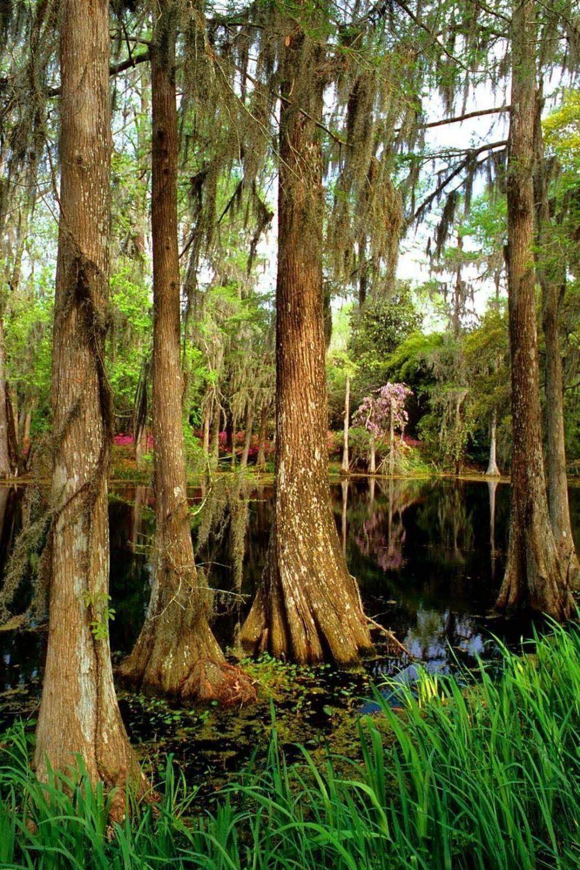 Garden Tour: Middleton Place   STROMY / TREES   Pinterest   Virtual tour
