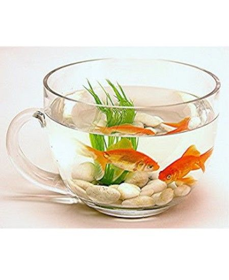 Bowled over fancy fish bowls that will make your goldfish for Decorative fish bowls