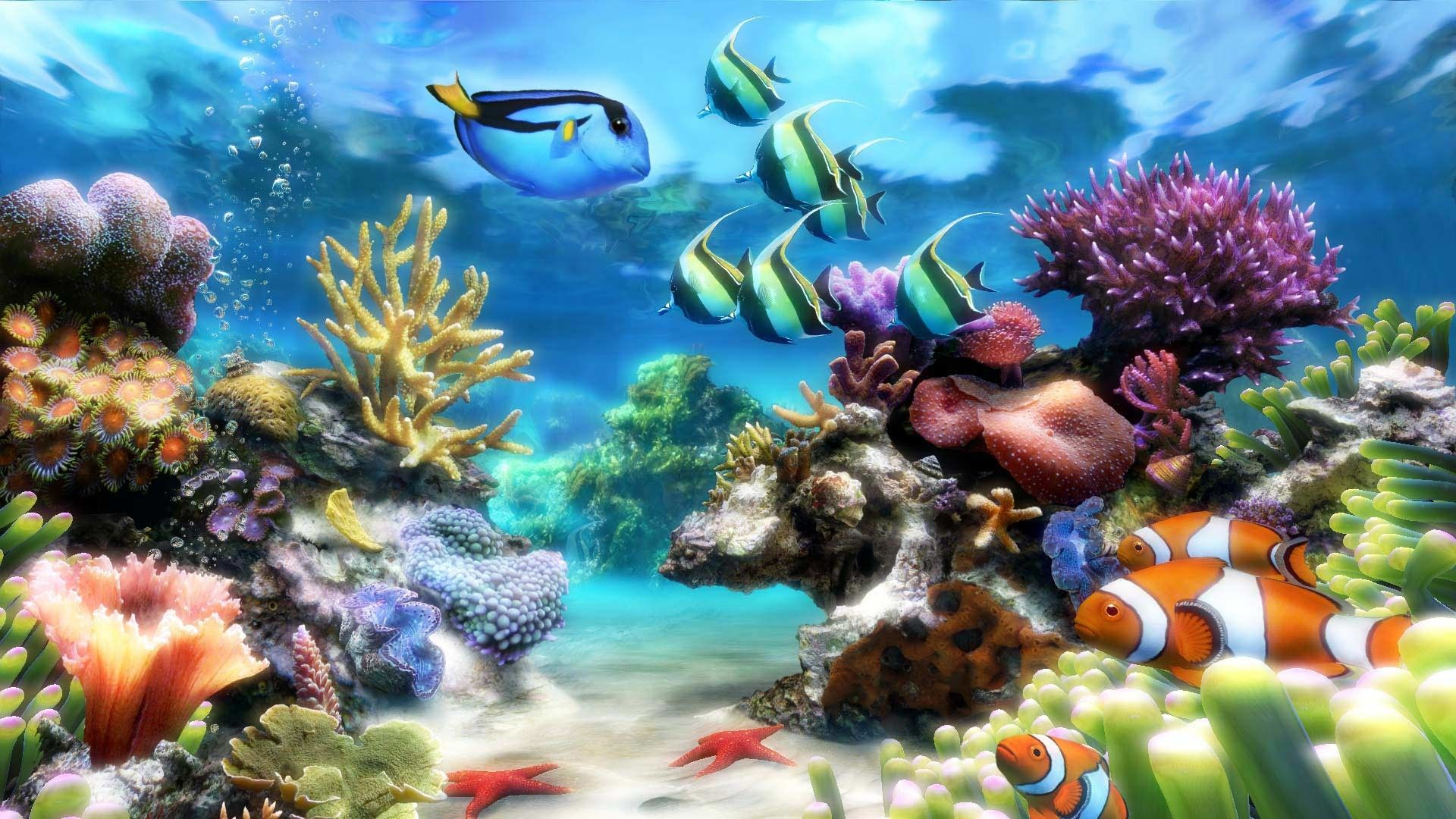 1920x1080 How To Get An Aquarium As Your Desktop Background Xp Vista 3d Fish Screensaver Aquarium Screensaver Aquarium Live Wallpaper Aquarium Pictures