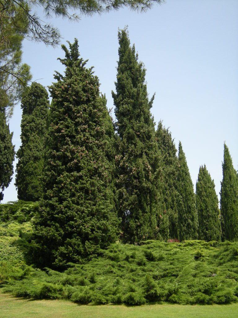 Giardino Sigurta Composizione Di Sempreverdi Sempreverde