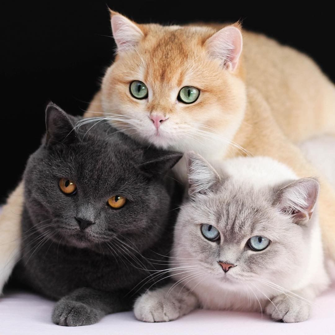 Pin By Sydney Sims On Suss In 2020 Beautiful Cats Cute Cats Beautiful Cat Breeds