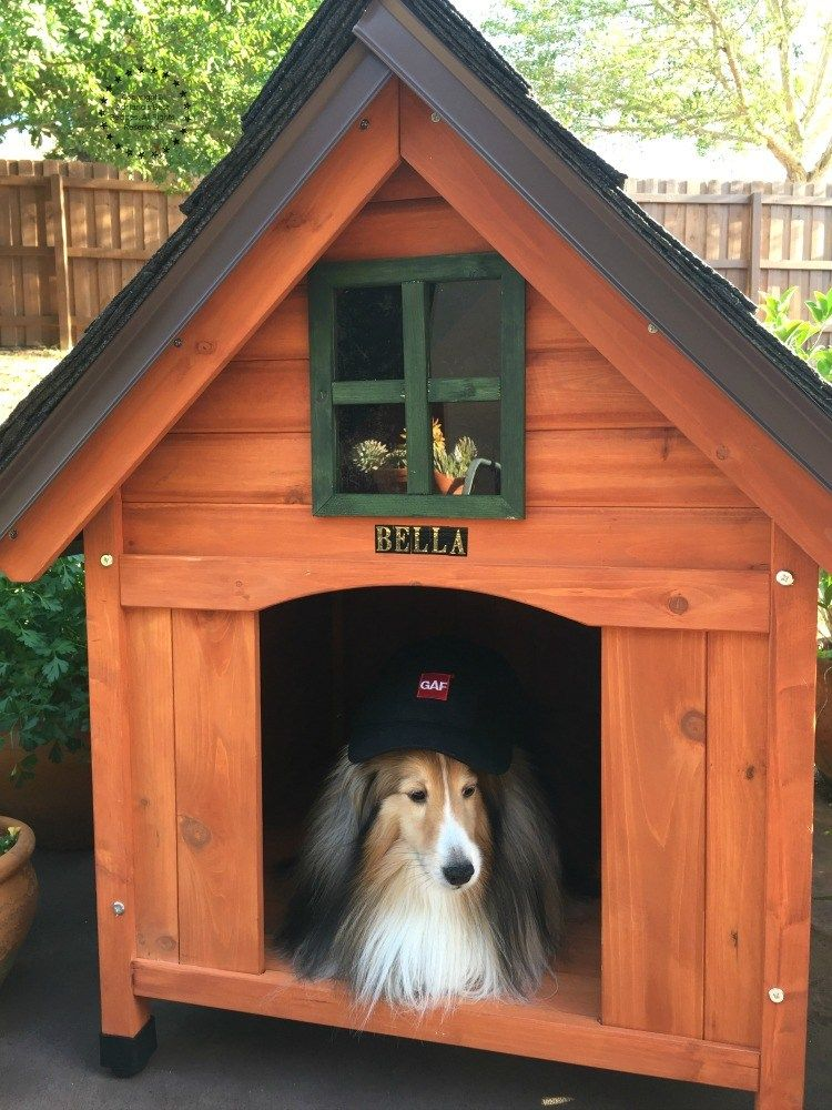 Best dog house do it yourself project cool dog houses