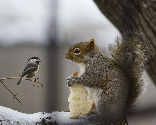 Sharing is caring. This is quite reminiscent of my deck. We feed our squirrels and the little birds eat the food too. Precious