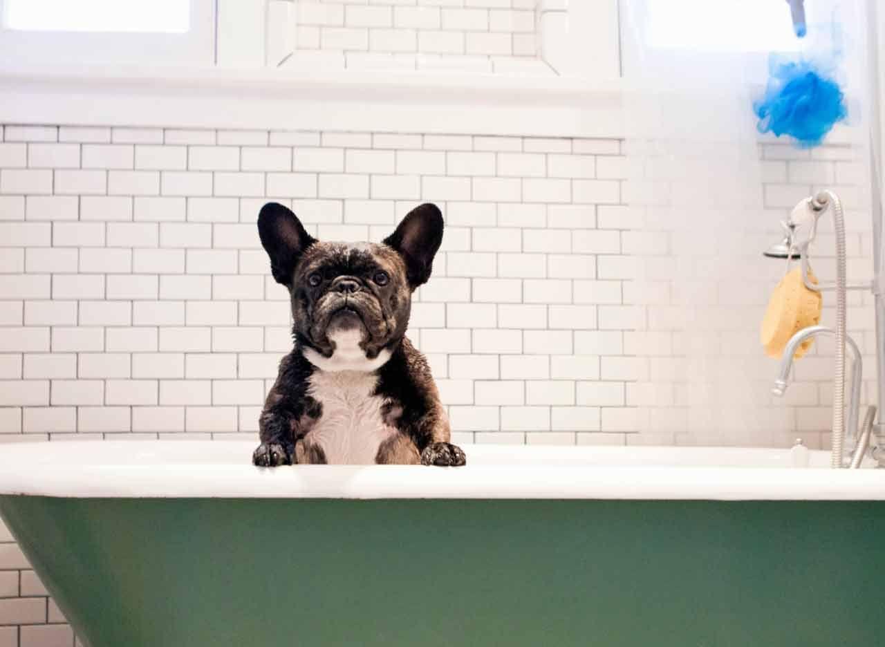Le bicarbonate de sodium est aussi un indispensable pour nos animaux ! Hygiène et santé, il nous aide à prendre soin d'eux sans danger.