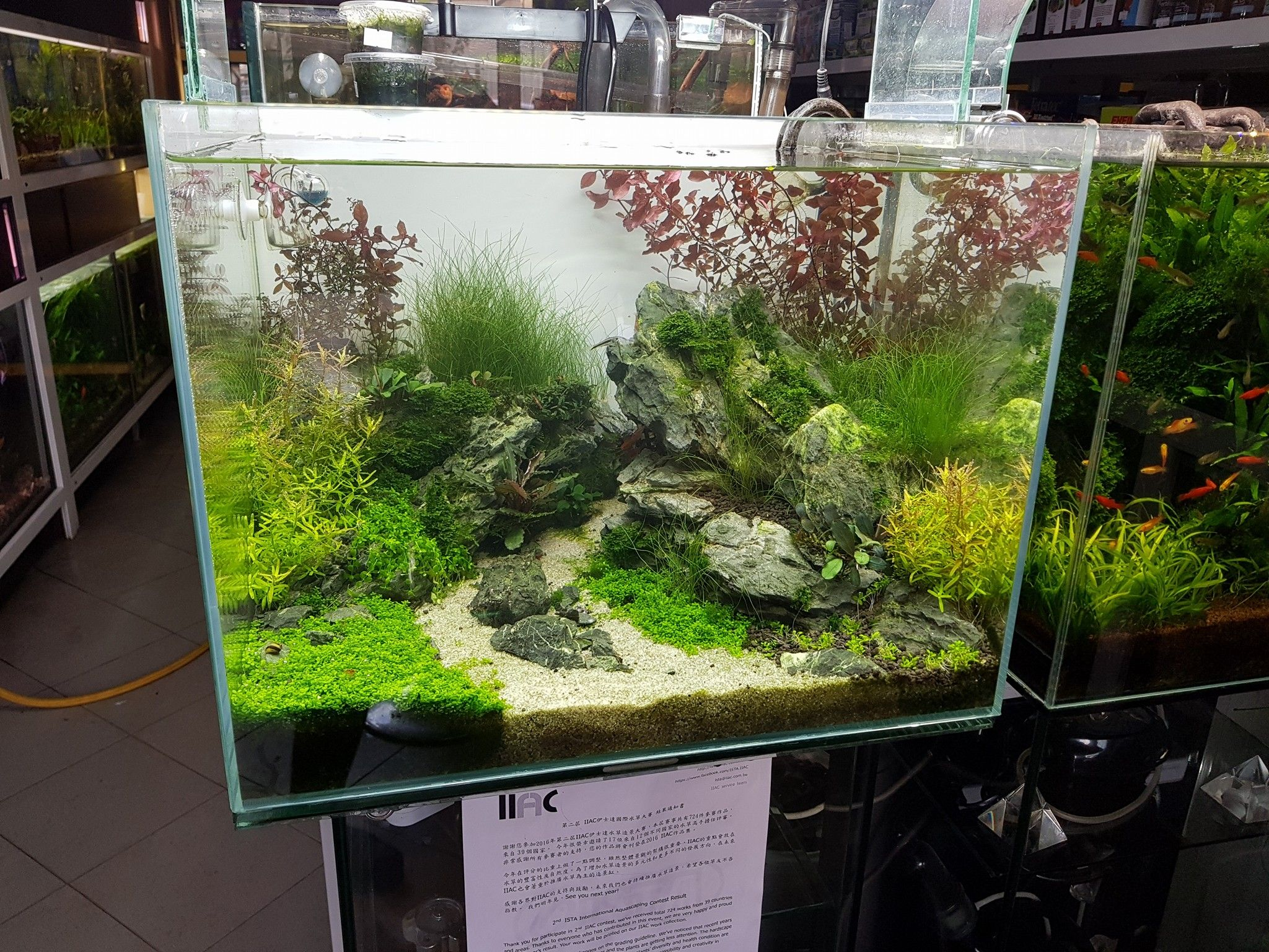 Pin by denis istomin on aquascape pinterest aquascaping and