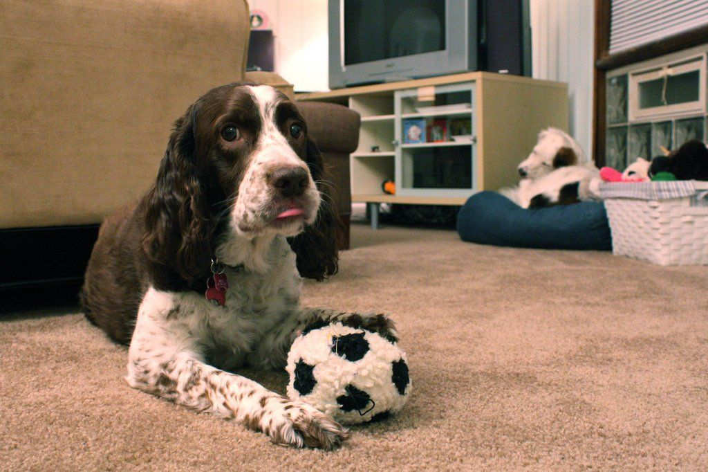 10 Best Toys For Dogs With No Teeth (Or Few Teeth) And ...