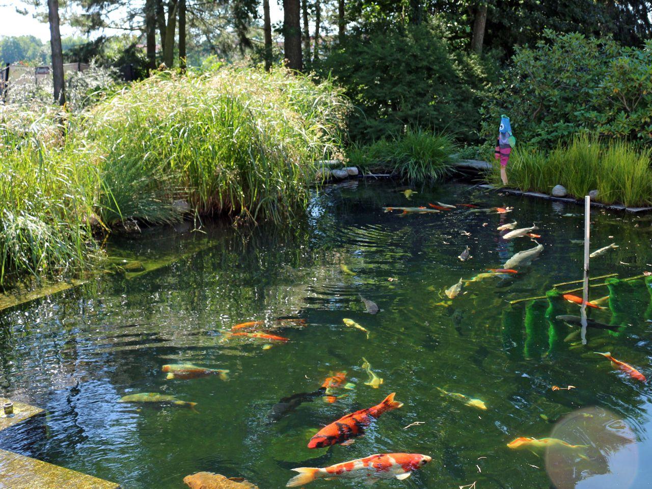 Koiteich mit bester wasserqualit t dank modernster for Koi und goldfische in einem teich