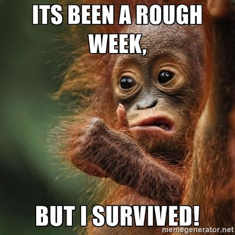 Orangutan Survive Its Been A Rough Week But I Survived With