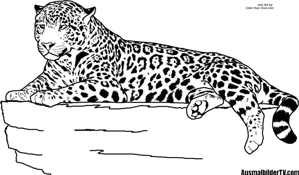 Jaguar Ausmalbild Tier   Ausmalbilder   Pinterest   Ausmalbilder