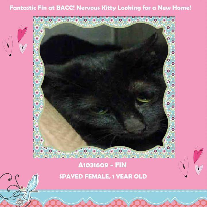 TO BE DESTROYED 4/26/15 *NYC* GORGEOUS YOUNG GIRL! * Brooklyn Center * Meet Fabulous Fin! She was brought to our shelter as a stray and is now looking for her new home! She does not like being in the shelter and has been fearful during all interactions. She is spayed, so she can go home ASAP!! Help her find a relaxing home *   My name is FIN. ID # A1031609. I am a spayed female black dom sh mix.  I am about 1 YEAR 1 MONTH old.  I came in as a STRAY on 03/28/2015 from NY 11206