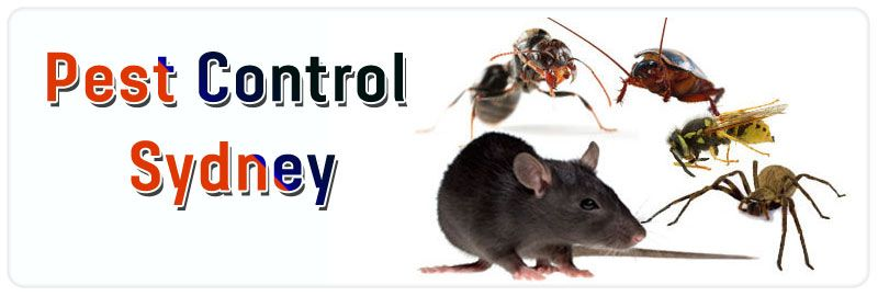 Pest Control Sydney  Call us @ 1800441506 and get best pest