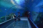 National Aquarium Denmark - Wikipedia, the free encyclopedia