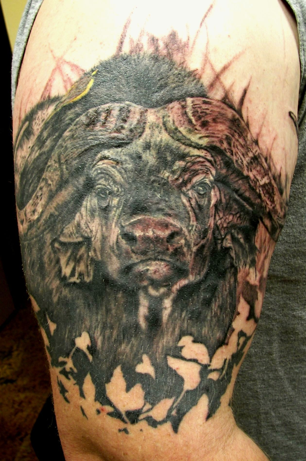 my cape buffalo tattoo done at holy roller tattoo holy roller tattoo tattoos and tattoo. Black Bedroom Furniture Sets. Home Design Ideas
