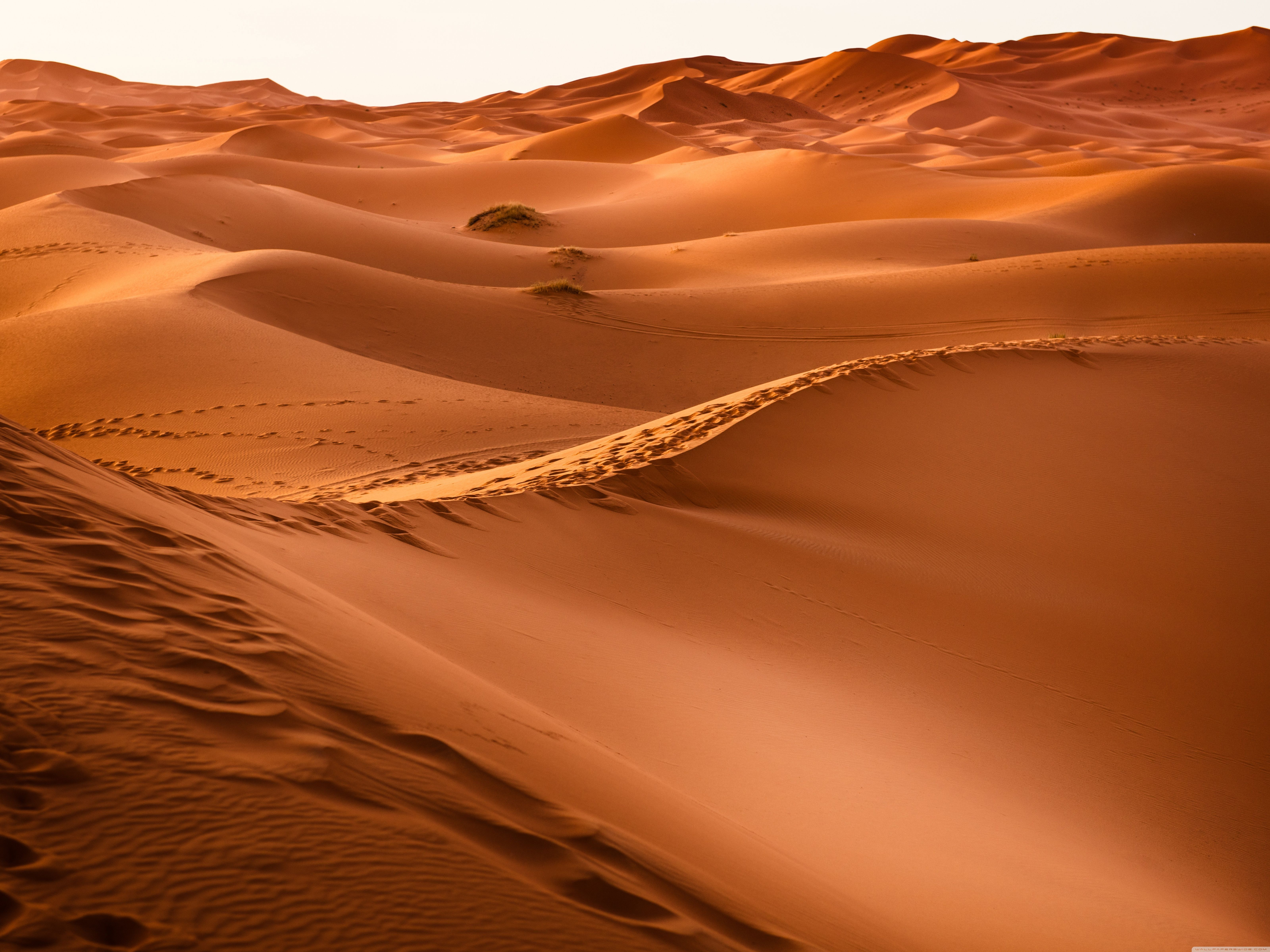 sahara desert images - HD1332×850