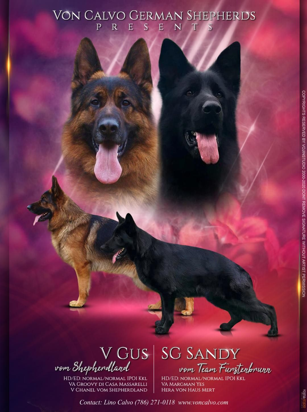 Von Calvo German Shepherds In 2020 German Shepherd Breeders German Shepherd Puppies German Shepherd
