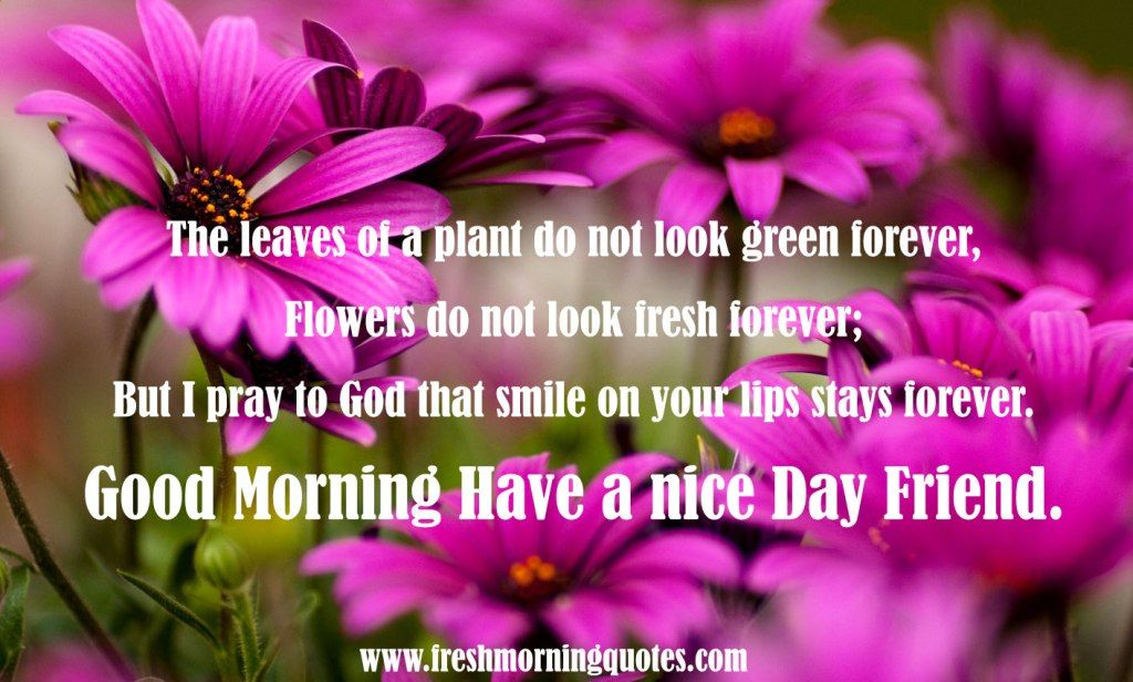 Good Morning Friend Have a nice Day - Freshmorningquotes | Good ...