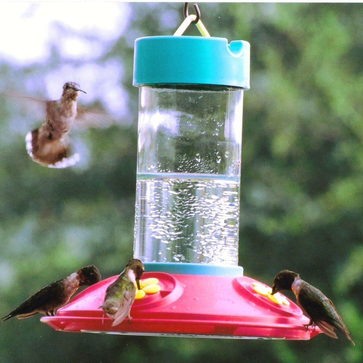 Dr jbs original 16 oz clean hummingbird feeder humming