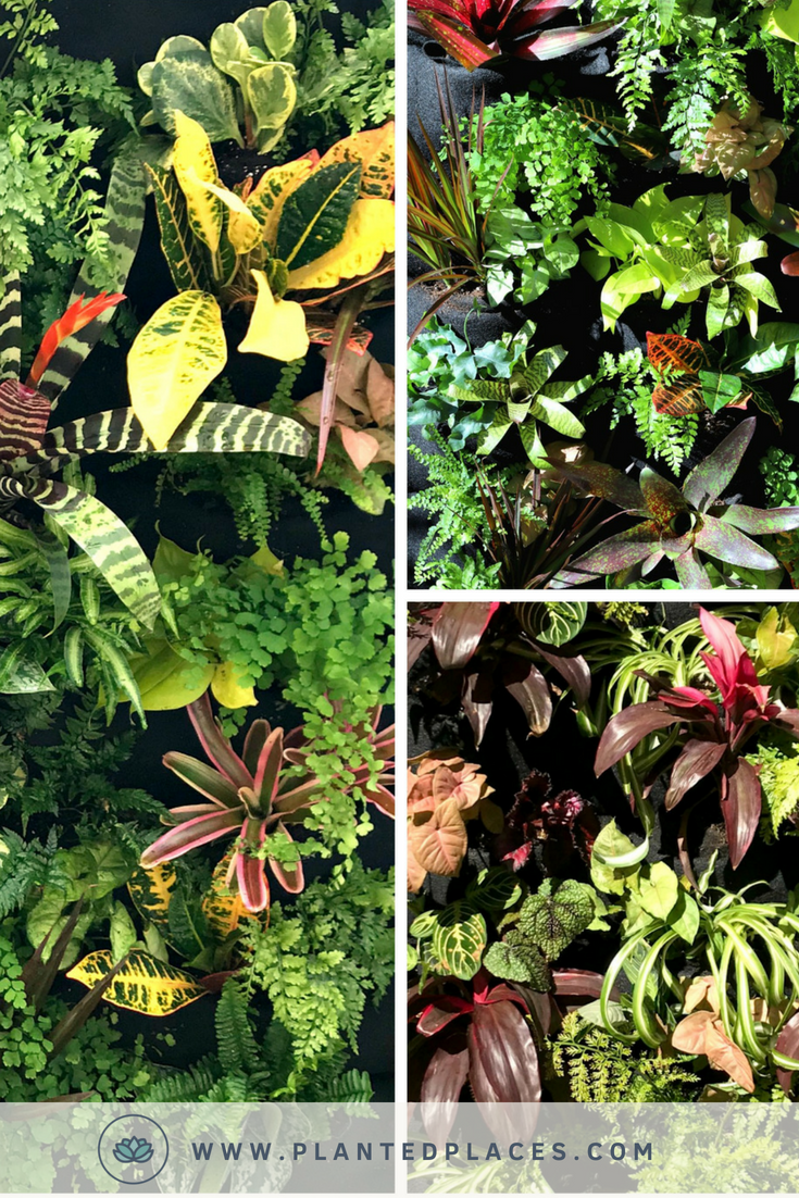 Get creative and diy a leafy living wall for your home our diy