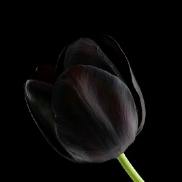 Facebook Rosa Negra