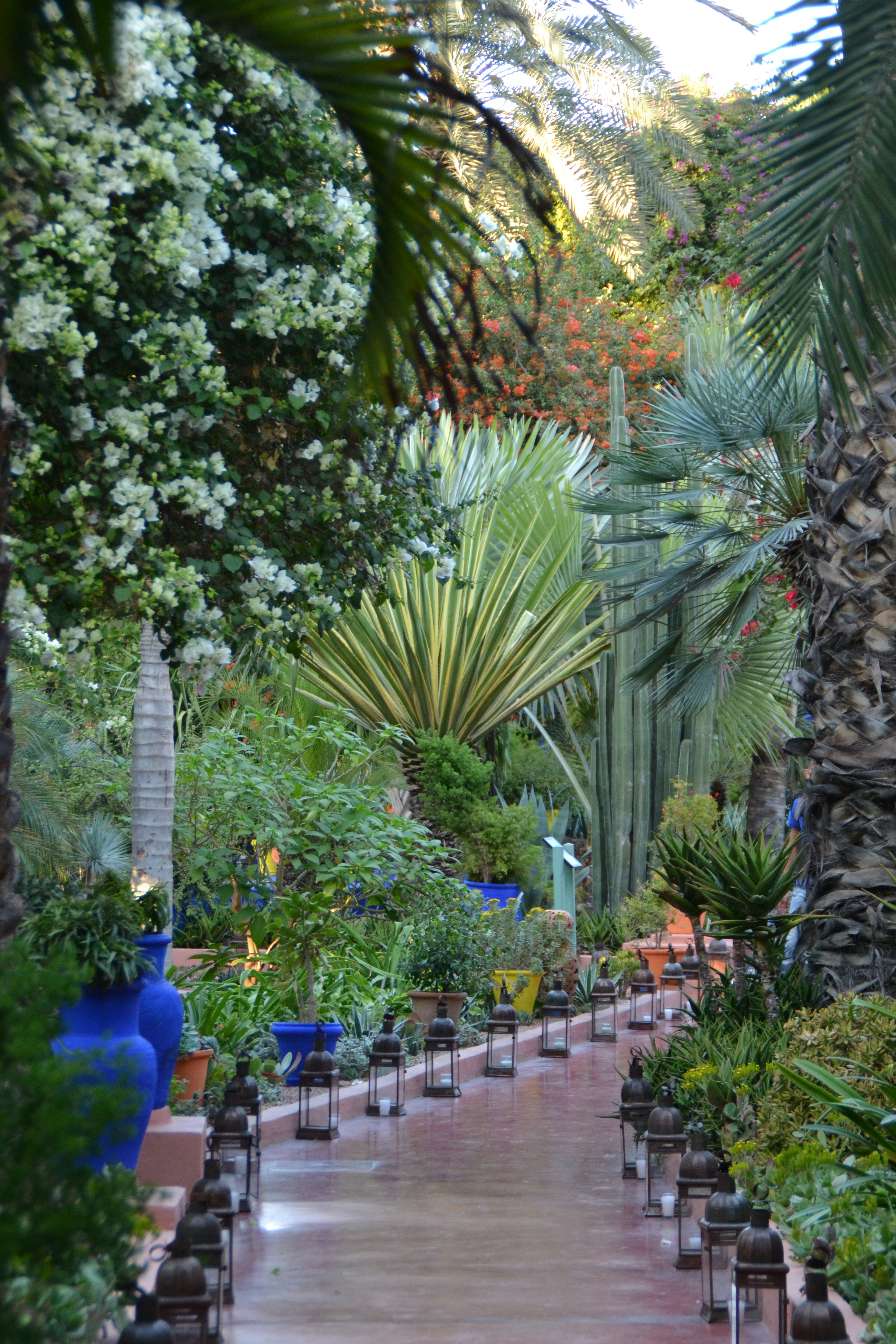 les jardins de majorelles marrakech pinterest jardin majorelle jardins et maroc. Black Bedroom Furniture Sets. Home Design Ideas