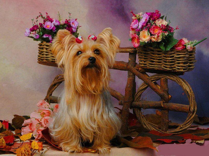 Fondos De Pantalla De Animales: Perro Y Flores Fondo De Pantalla
