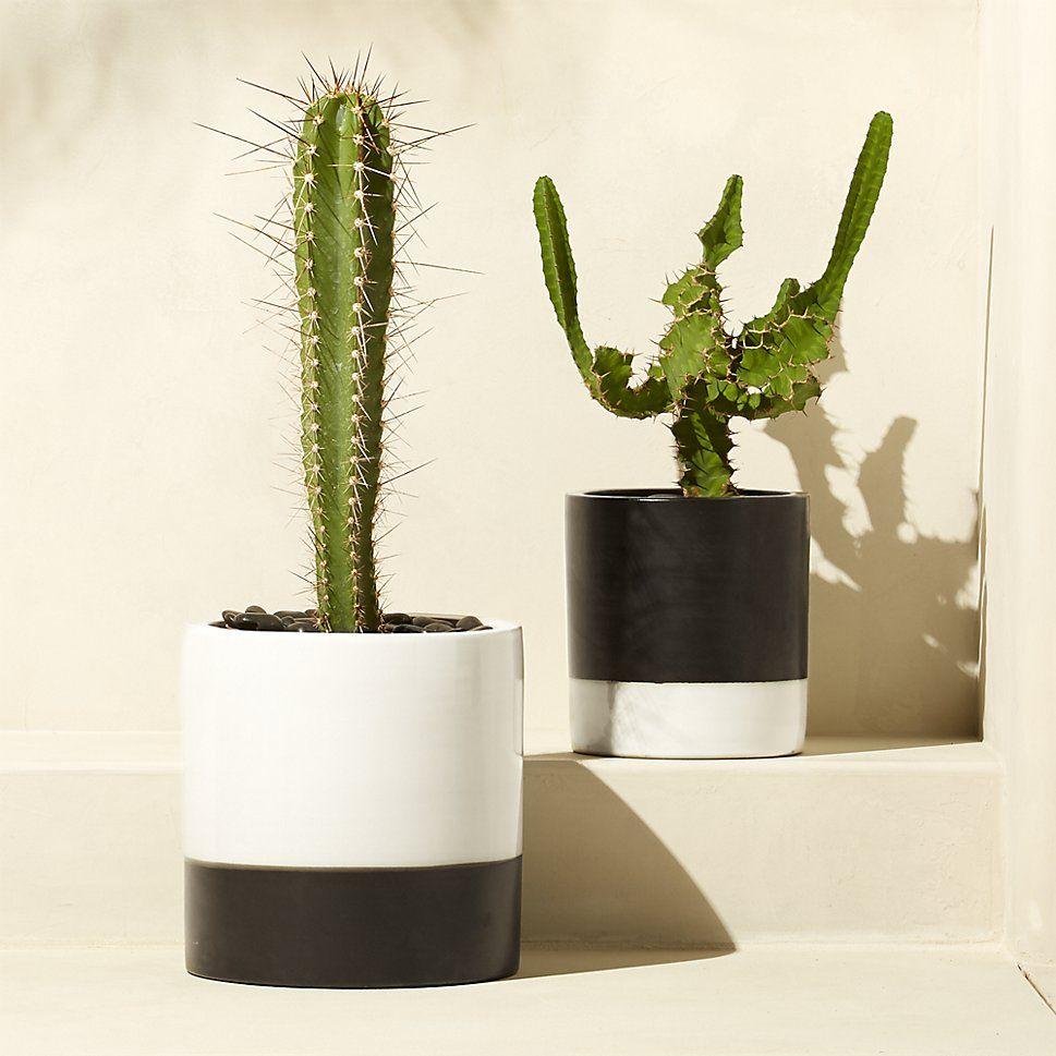 basic planters | CB2