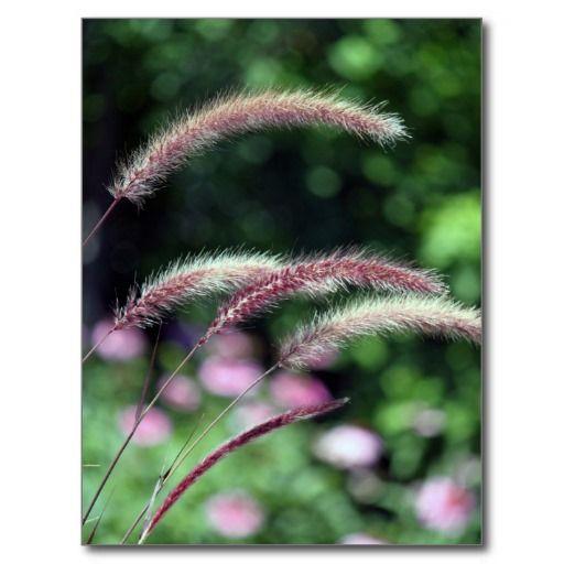 Red Grass Postcard